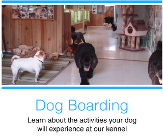 Dog Boarding | Learn about the activities your dog will experience at our kennel | dogs