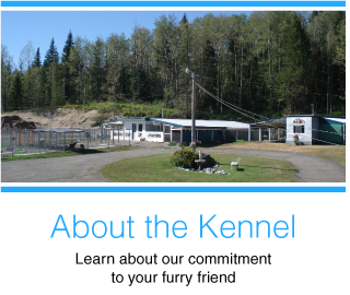 About the Kennel | Learn about our commitment to your furry friend! | kennel