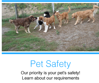 Pet Safety | Our priority is your pet's safety! Learn about our requirements | dogs playing