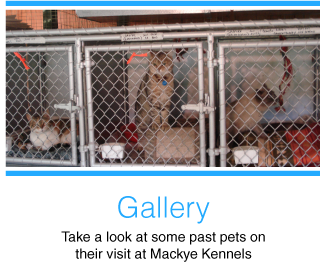 Gallery | Take a look at some past pets on their visit at Mackye Kennels | cats