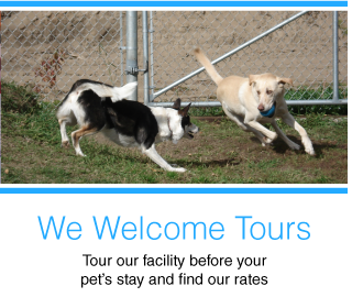 We Welcome Tours | Tour our facility before your pet's stay and find our rates | dogs playing