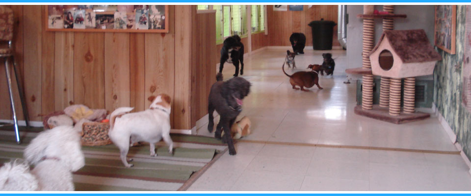 dogs in indoor playroom